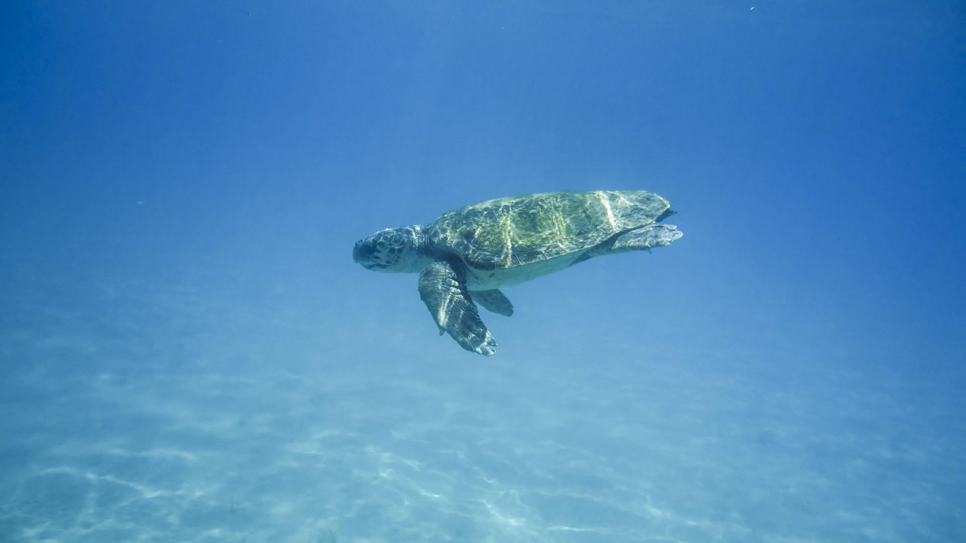 Turtle Island, Zakynthos, Greece