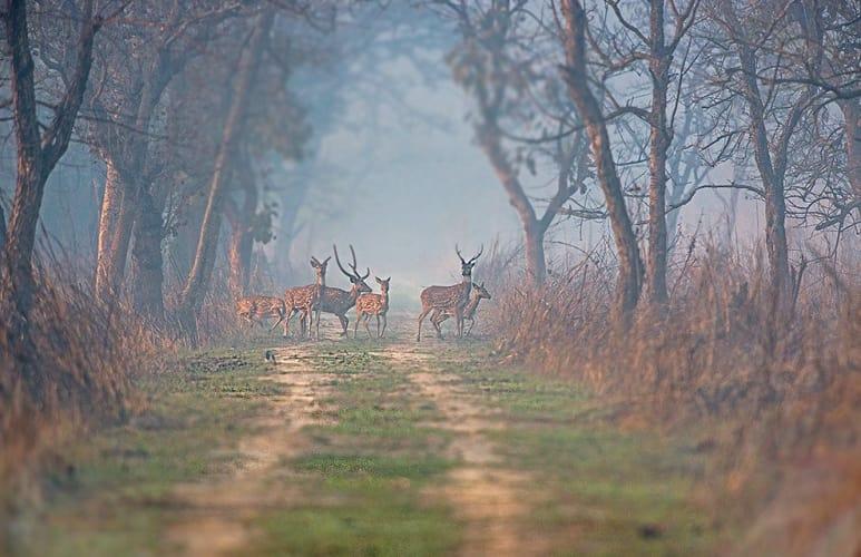 Realm of wilderness with TUTC Dudhwa Camp