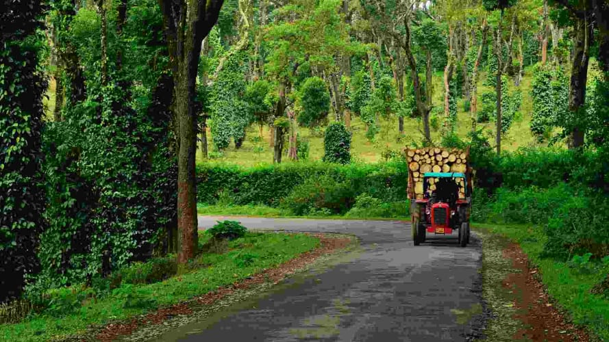Down the Coffee Trail - Self Drive from Bengaluru