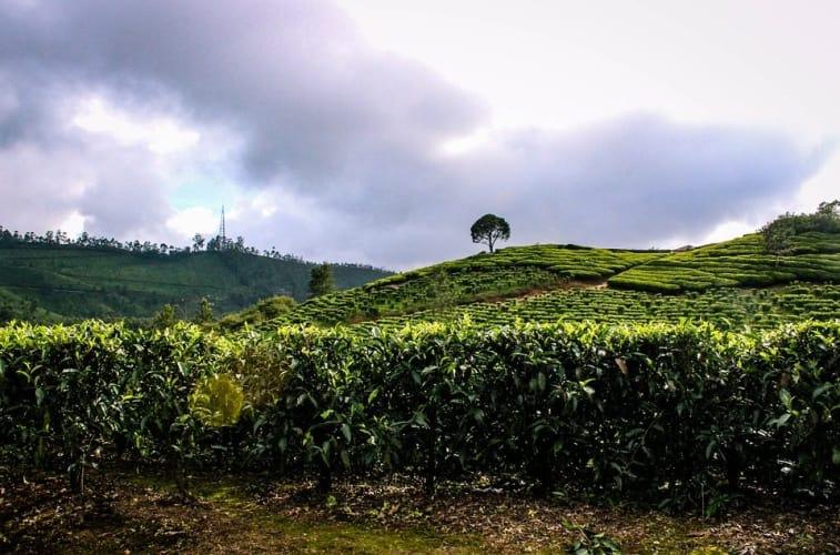 Extravagant Kerala