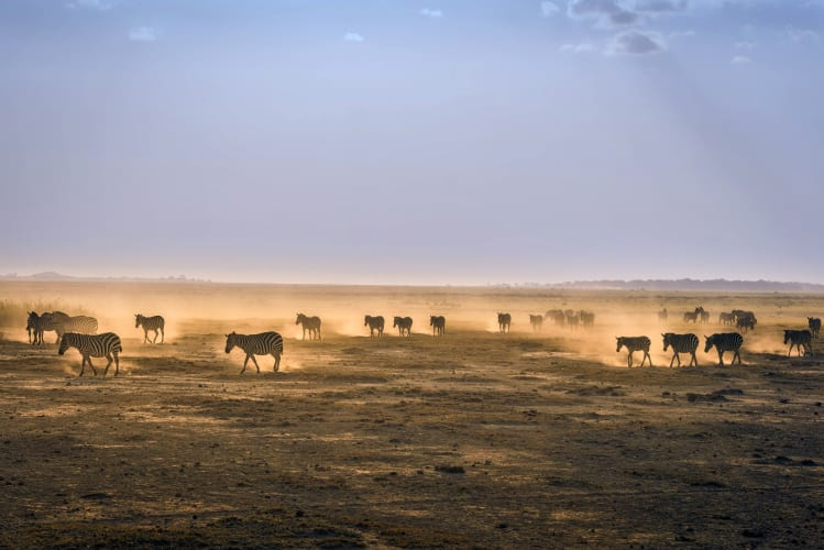 A Wild Time in Kenya with Masai Mara