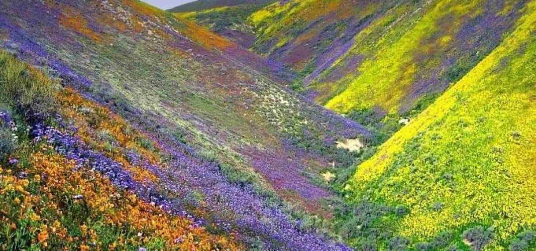 A Trek to the Valley of Flowers & Hemkund Sahib - ex-Rishikesh