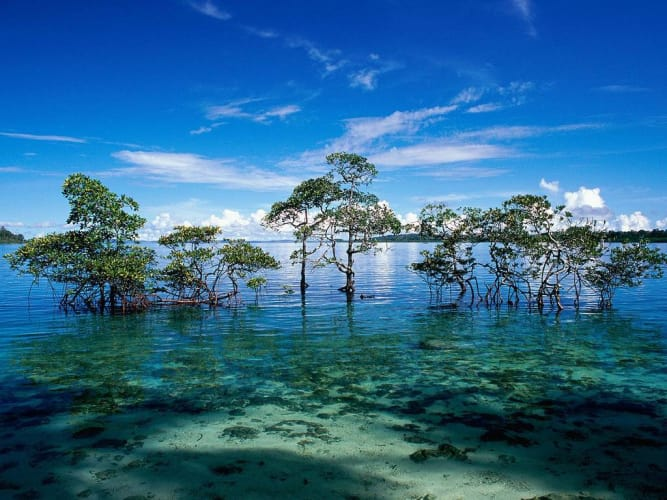 Andaman Delight with Neil Island by Air