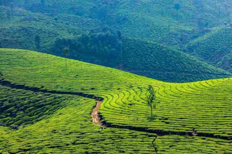 Mystical Kerala - 4 Nights In Kerala