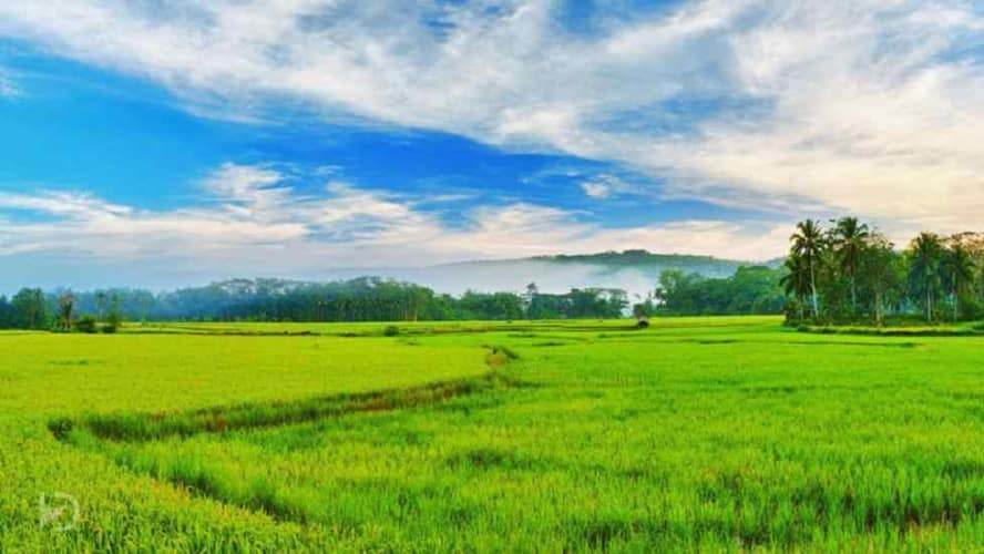 Green Valleys and Blue waters of Kerala; 5 Nights Package