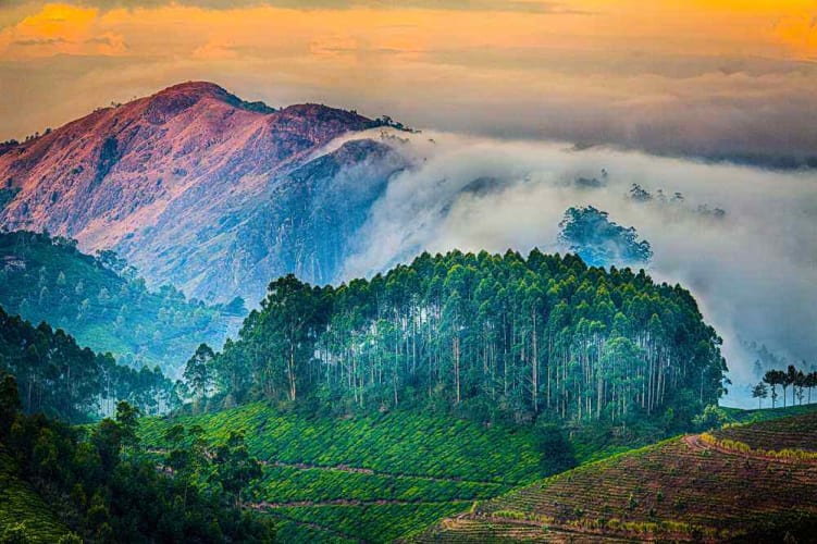 Hills & Backwaters of Kerala; 5 Days Package