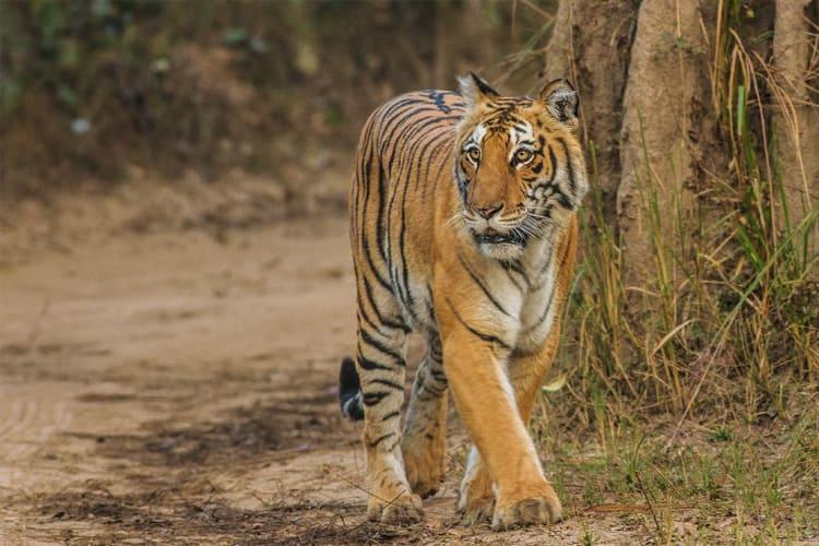Best of Uttarakhand - 5 Nights of Adventure