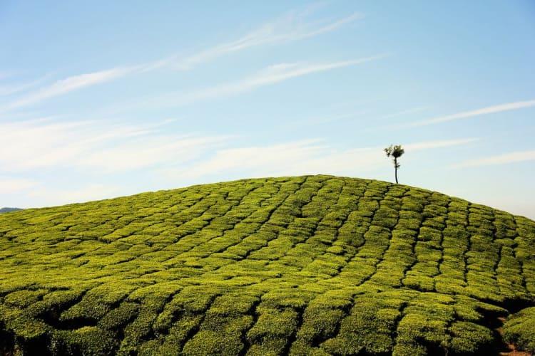 Alluring Kerala