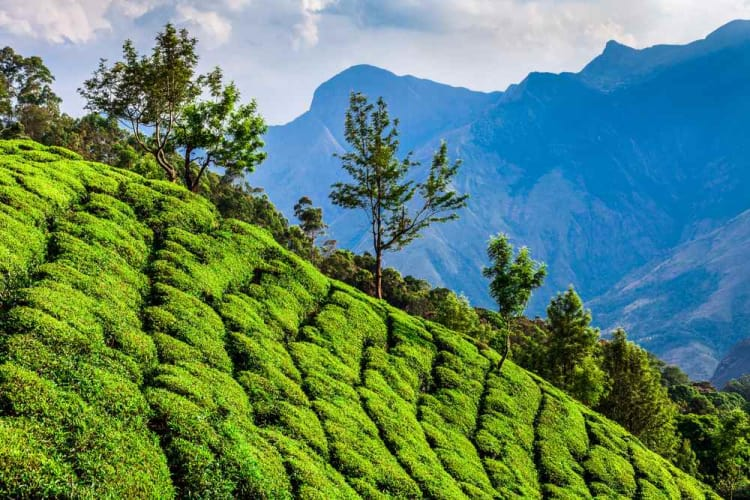 Amazing Kerala Honeymoon Trip; 5 Days Package