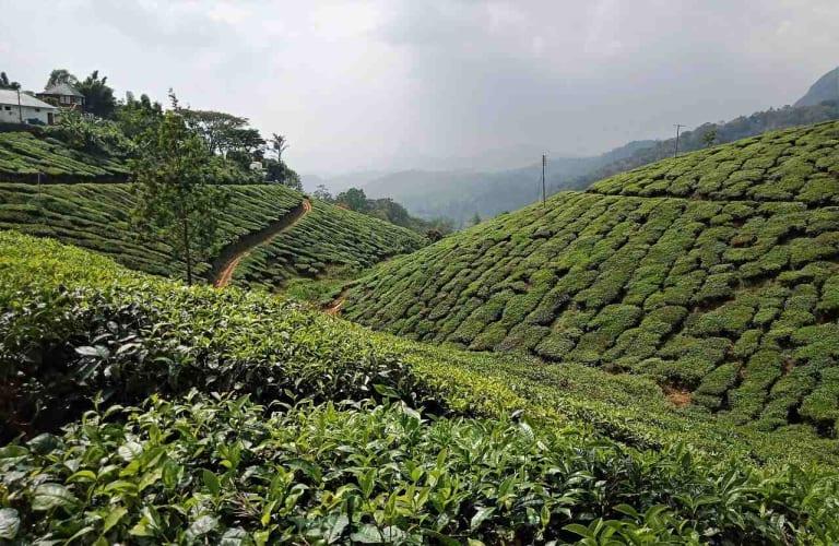 Quintissential Kerala Tour