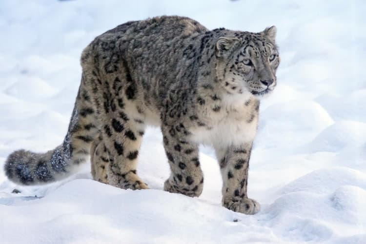 Snow Leopard Expedition to Spiti