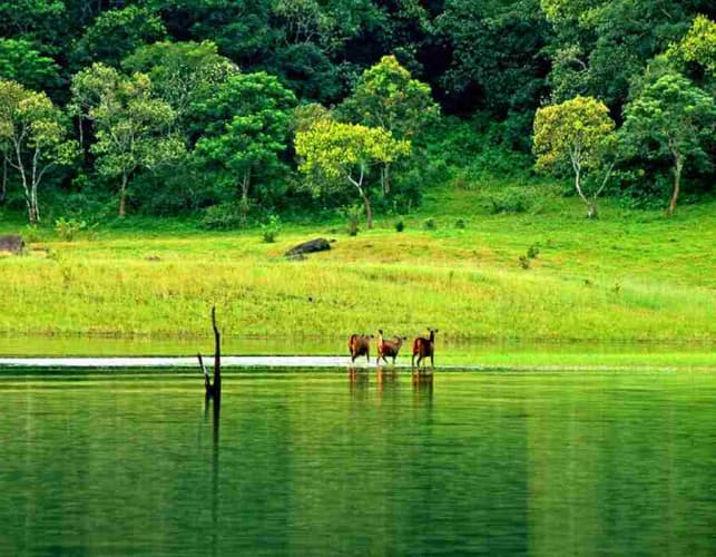 Hills and Backwaters of Kerala