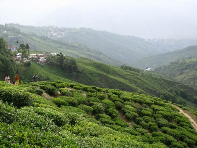 Astounding North East - Gangtok & Darjeeling