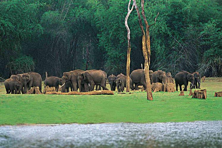 Dream Vacation to Kerala