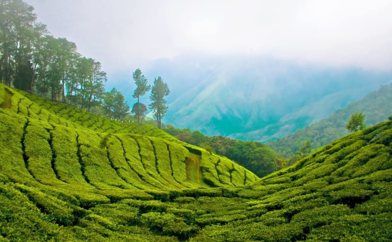 Enchanting Kerala - 5 Nights in Green Paradise
