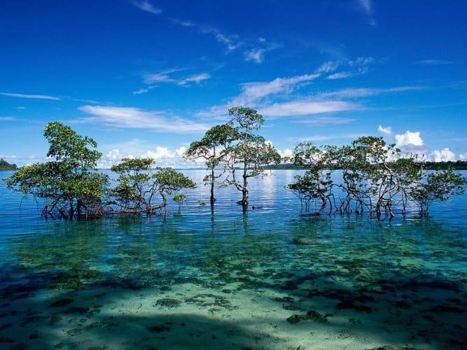 Andaman Islands Vacay