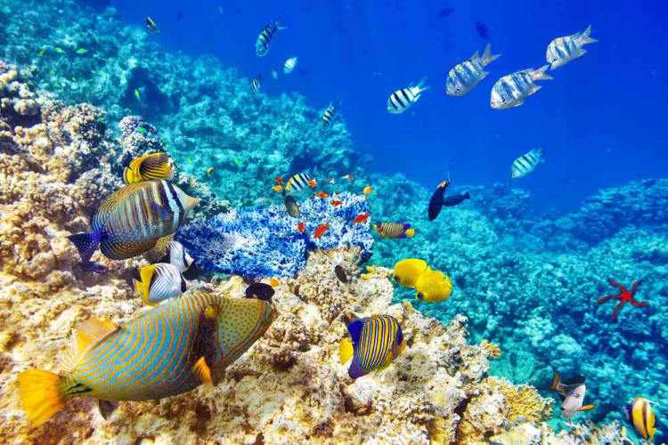 A Holiday in Tropical Andamans
