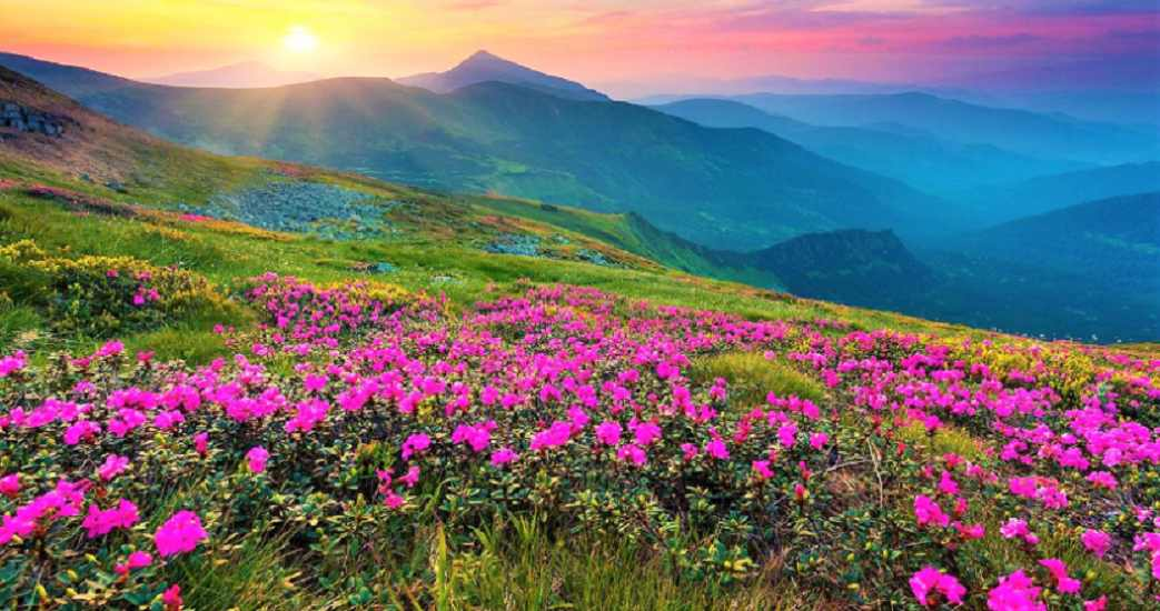 Trek through The Valley of Flowers