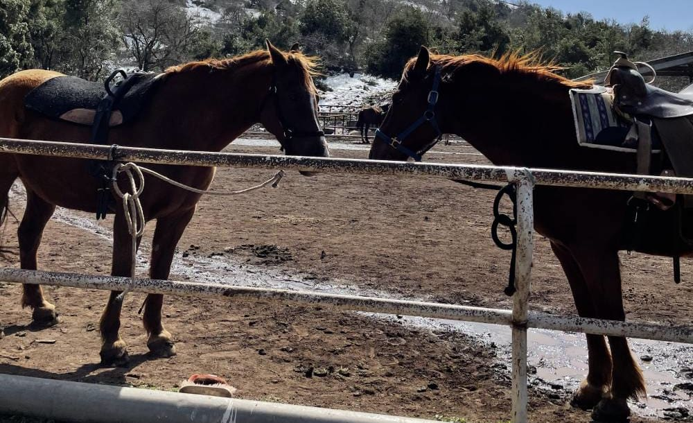 המלצות לרכיבה על סוסים בצפון הארץ