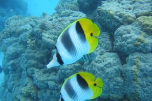 Aventura de Snorkeling  en Portobelo