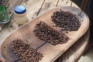 Tour a una granja de café en Boquete
