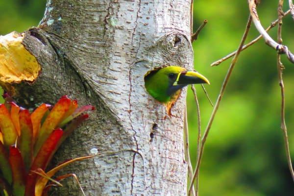 Avistamiento de Aves en en Boquete (8 horas)