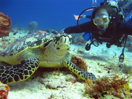 Tour de buceo en el Caribe