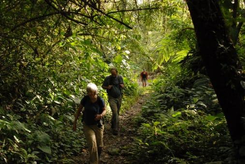 Caminata al Sendero Los Quetzales