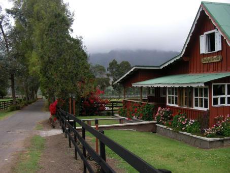 Tour a Cerro Punta, Haras y los Petroglíficos