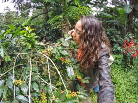 Tour del Café en Fusagasugá desde Bogota