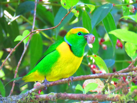 Avistamiento de Aves en en Boquete (5 horas)
