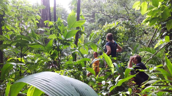 Paseo histórico y bosque tropical en Portobelo