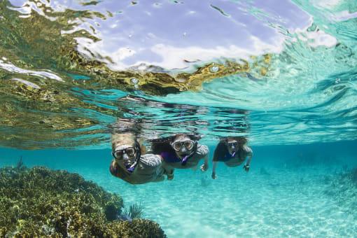 Snorkeling Tour en el Archipiélago de las Perlas