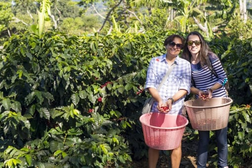 Tour por las Cataratas La Paz y Cafetal Doka desde San José
