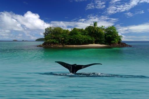 Avistamiento de ballenas y dia de playa en el Golfo de Chiriquí