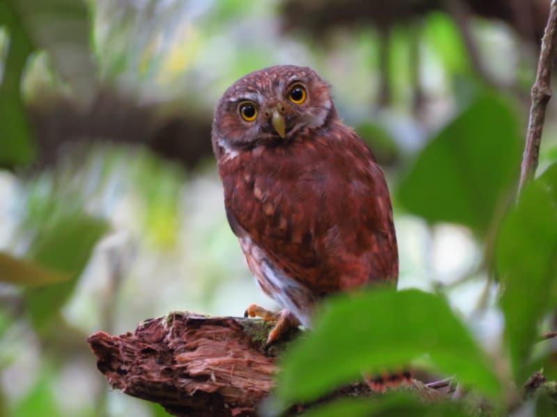 Avistamiento de Aves en la reserva natural Río Cristal