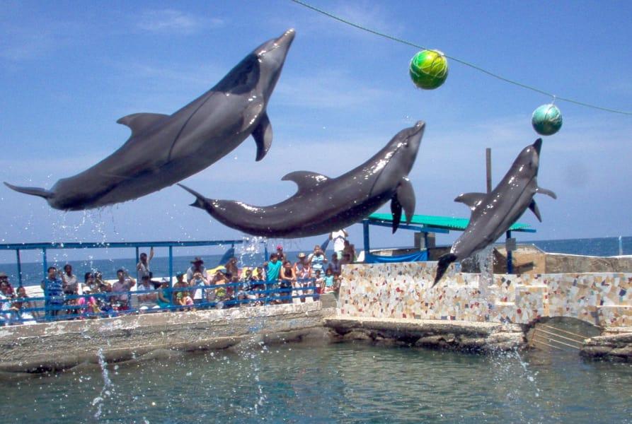 Tour de un día al Acuario del Rodadero y a Playa Blanca desde Santa Marta