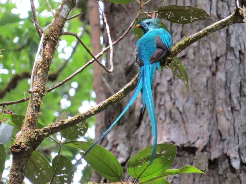 Avistamiento de Aves en en Boquete (10 horas)