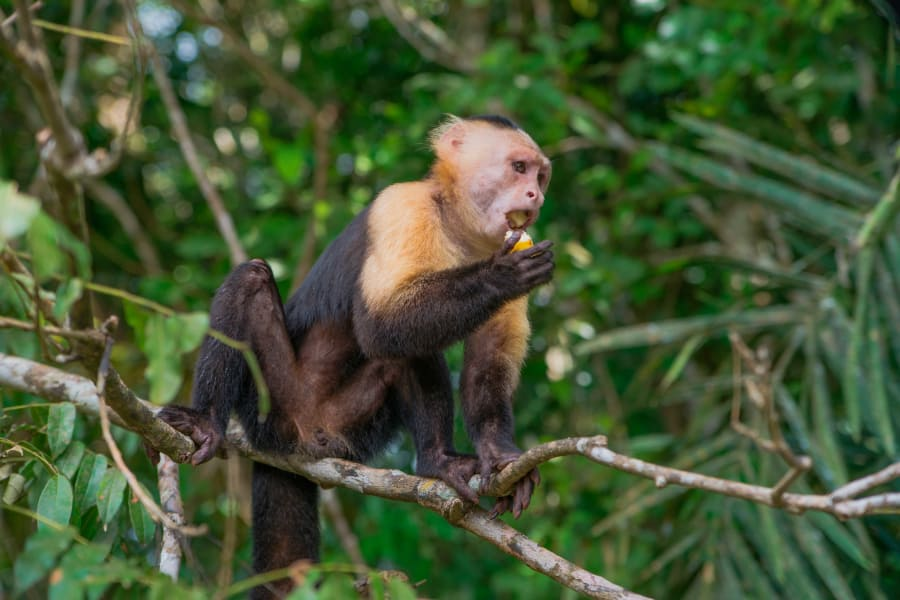Expedición a Isla Monos y Canal de Panamá