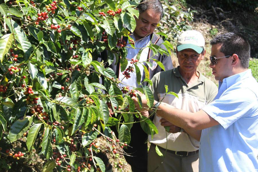 Tour y taller cultura del café especial en Boquete