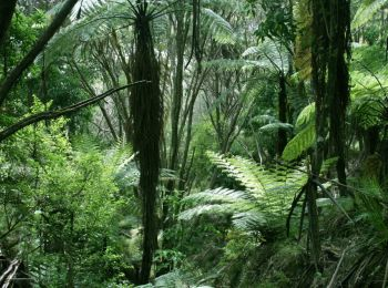 Trails and Walks with Totally Tarawera