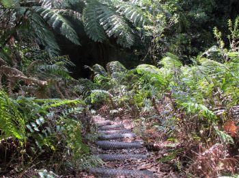 Kaharoa Conservation Area