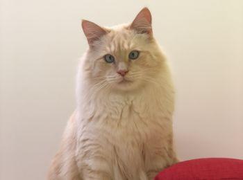 Fancy Meow Cat Cafe