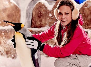 Ski Dubai Penguins Encounter