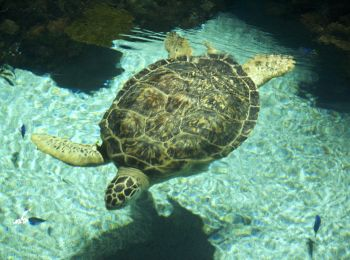 The Turtle Rehabilitation Sanctuary