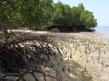 Mangrove National Park