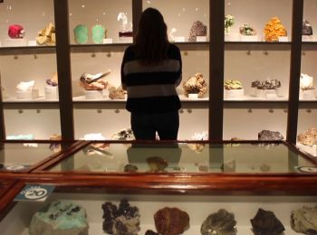 The Harvard Museum of Natural History