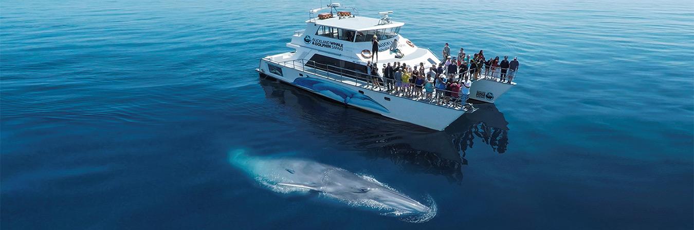 Auckland Whale & Dolphin Safari