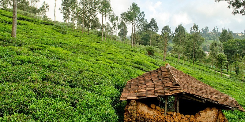 Ooty - Top Hill Stations in India
