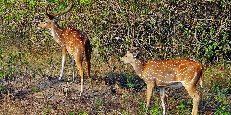 Bandipur National Park